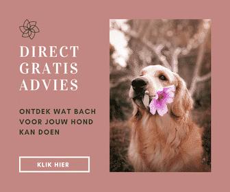 Bachbloesems en honden
