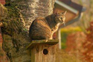 tweeling-kat