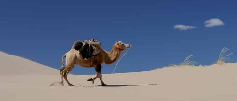 bach bloesem kameel