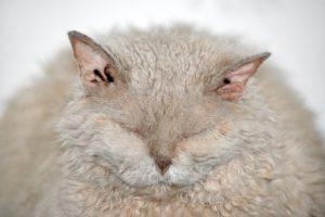 bach bloesem kat