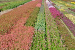 bachbloesems overzicht: alle bloesems op een rij