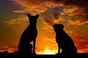 bach bloesem voor dieren: innerlijke rust voor je trouwe maatje