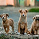 wat-is-bachbloesems-voor-honden