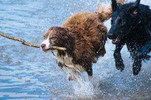 Bach bloesem hond heeft een positief effect op je trouwe viervoeter!