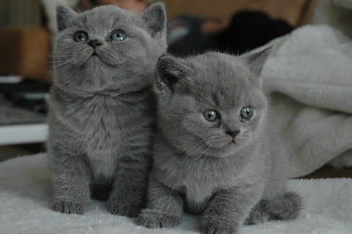 katten karakters