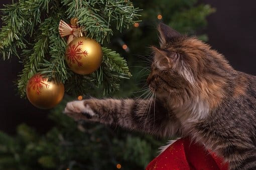 betekenis kerstboom traditie