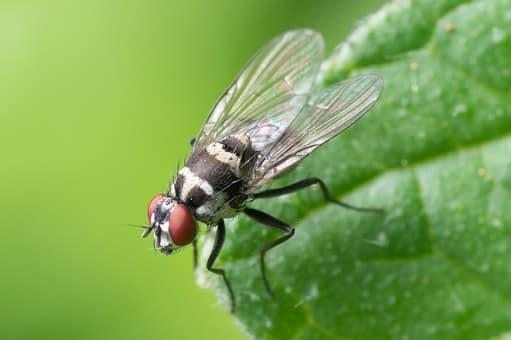 middelen tegen vliegen
