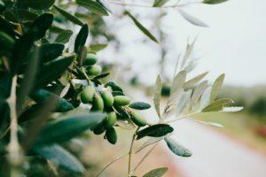 Bach bloesem olive aan de plant