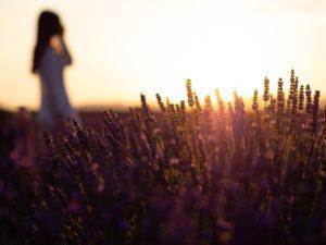 Geneeskrachtige plant lavendel