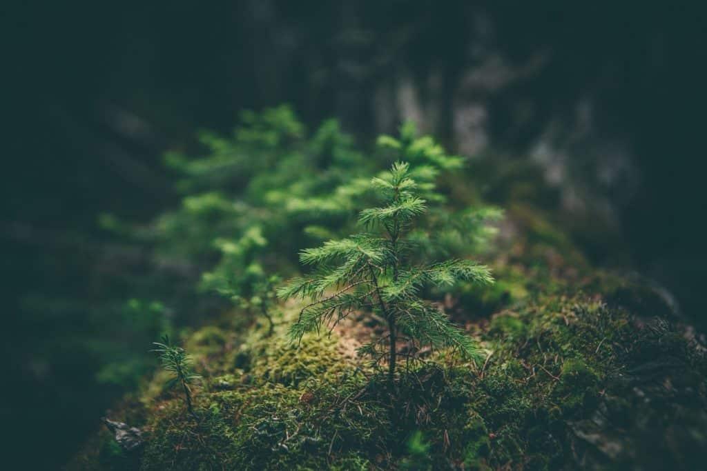 Een boom als alternatief voor grafsteen