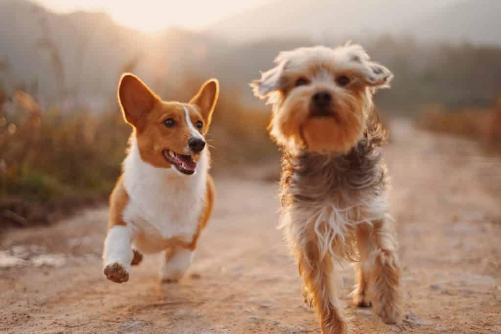 Bach bloesem therapie is uitermate geschikt voor honden