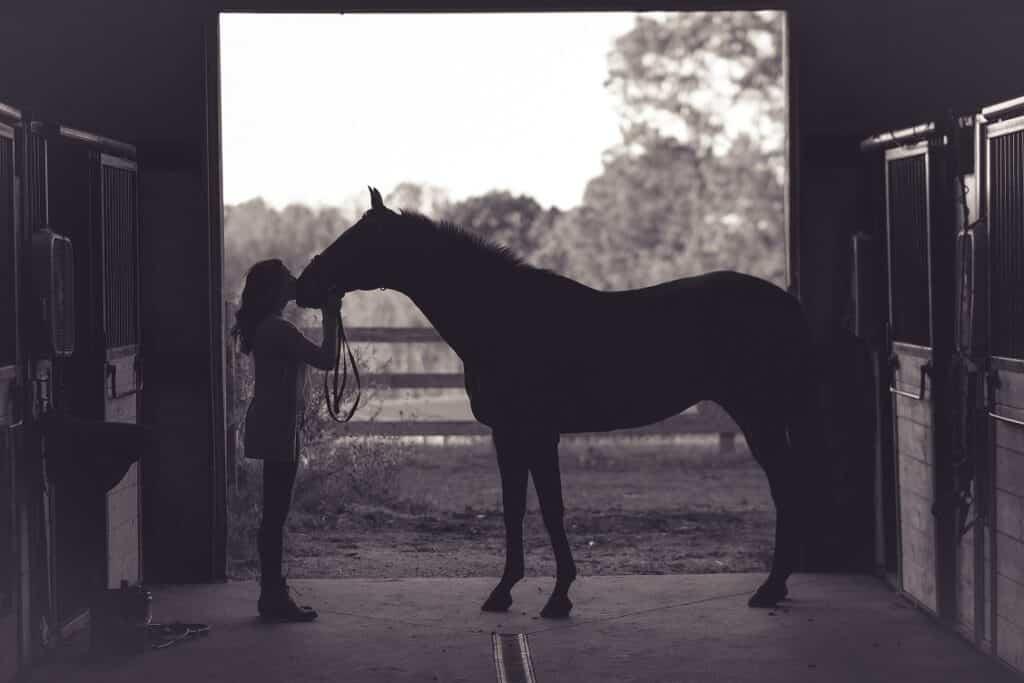 Bach bloesems voor paarden met gevoel