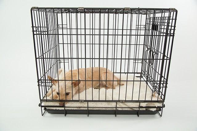Voor een hond met verlatingsangst kan té veel ruimte overweldigend voelen. In een kleinere ruimte kan hij dan juist tot rust komen.