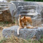 natuulijk middel tegen vlooien en teken bij katten
