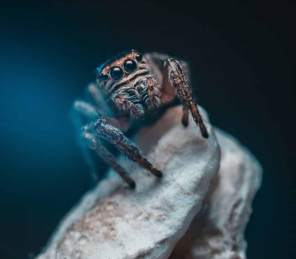 als een spin in je droom jou iets te vertellen heeft kun je maar beter goed luisteren