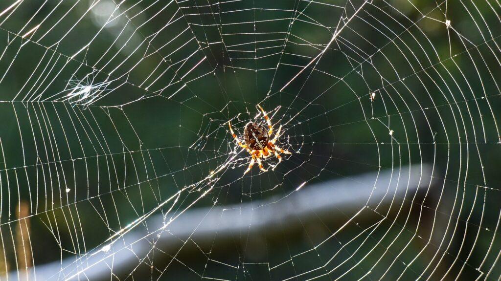 dromen over een spin en zijn web kunnen er zo uit zien