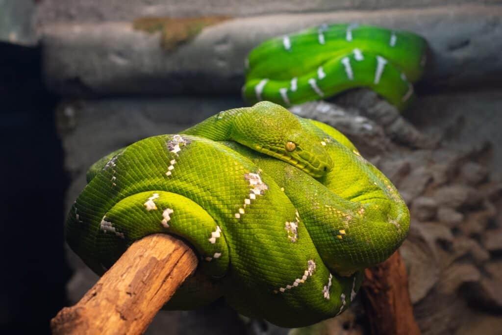 dromen over slangen zijn er in veel verschillende soorten