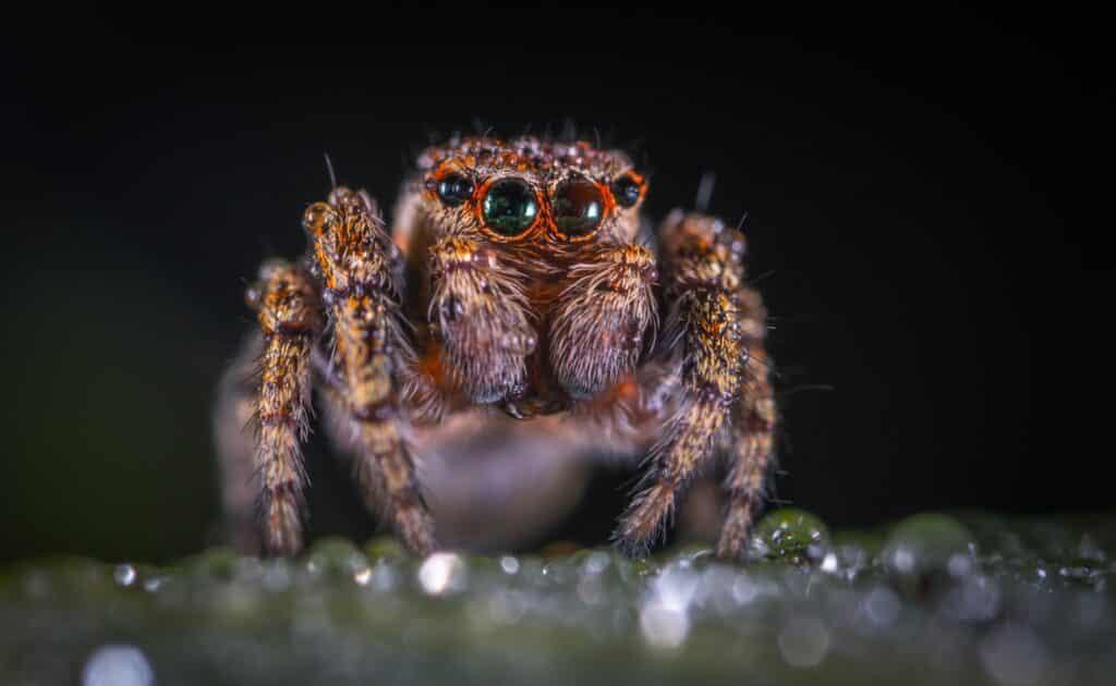 Dromen over spinnen hoeven niet eng te zijn. Deze spin is toch best schattig?